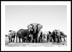 Elephants at a waterhole