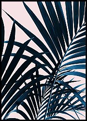Close-Up Of Palm Tree